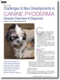 canine_pyoderma2