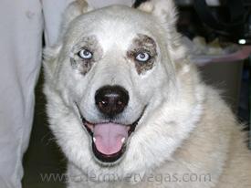 Zinc Responsive Dermatosis In Lacey Wa Dermatology Clinic For Animals