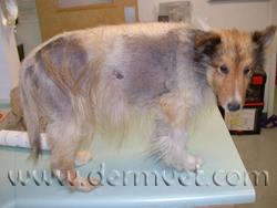 Cushing S Disease In Lacey Wa Dermatology Clinic For