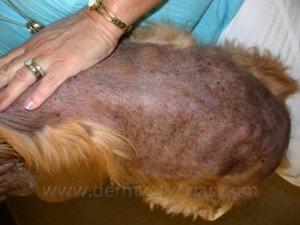 View Our Gallery of Before and Pictures of Parasitic Diseases